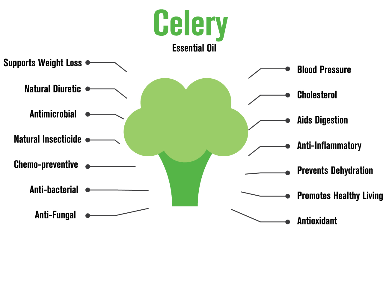 diagram of a celery - g2 wiring diagram  institut-triskell-de-diamant.fr