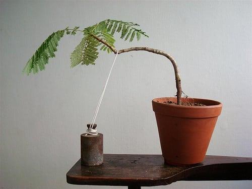 Super How To Wire A Bonsai Tree Bonsai Tree Gardener Wiring Cloud Monangrecoveryedborg