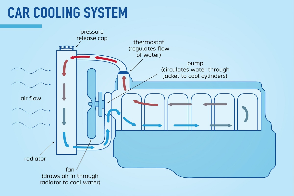 Incredible Why Engine Coolant Is So Important Car Servicing The Nrma Wiring Cloud Onicaxeromohammedshrineorg