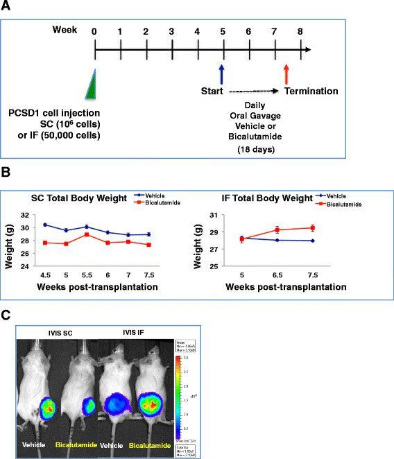 Marvelous Pcsd1 A New Patient Derived Model Of Bone Metastatic Prostate Wiring Cloud Hemtshollocom