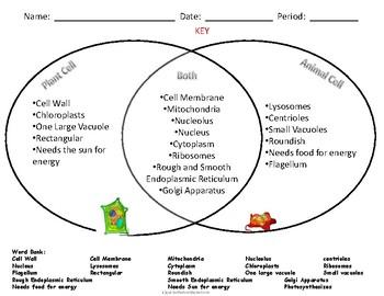 Plants Vs Animals Vs Fungi Venn Diagram - Info Car Wallpaper