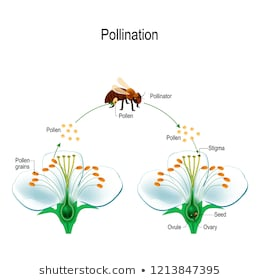 Remarkable Pollination Images Stock Photos Vectors Shutterstock Wiring Cloud Hemtegremohammedshrineorg