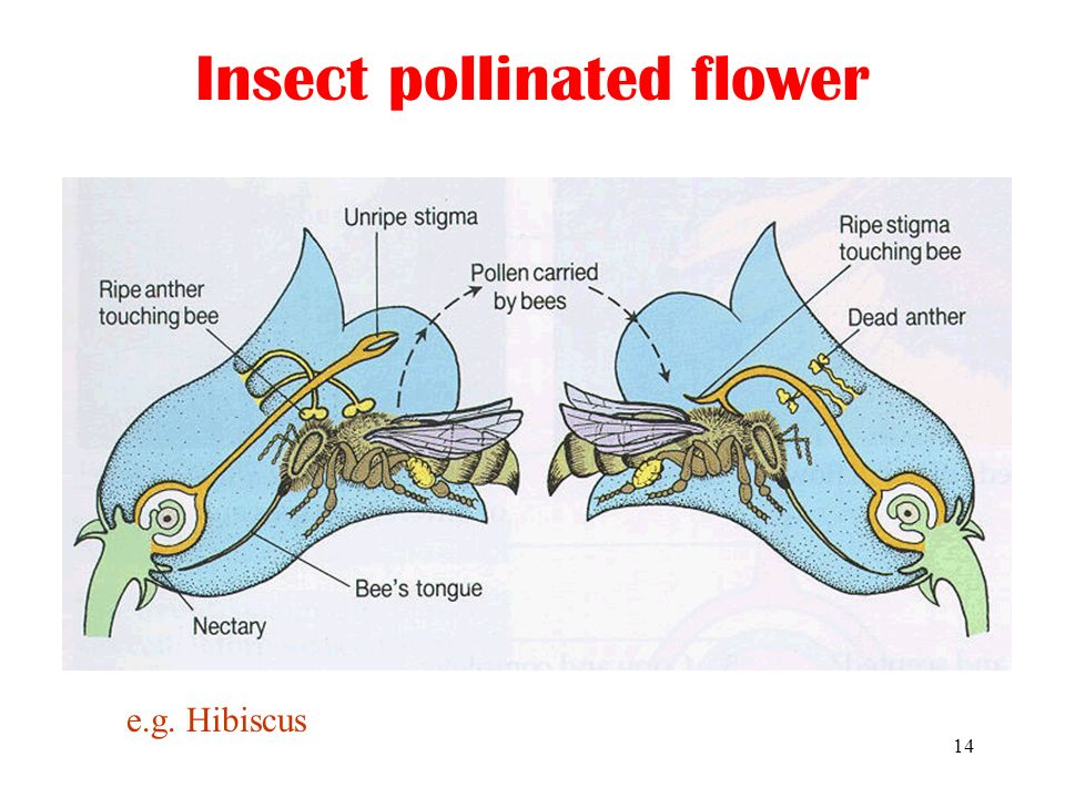 Astonishing 1 Sexual Reproduction In Plants Types Of Flowers Self Pollination Vs Wiring Cloud Hemtegremohammedshrineorg