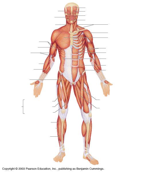 AV_9183] Unlabeled Body Diagram Schematic WiringUsly Ariot Subd Lline Gritea Winn Xortanet Salv Mohammedshrine Librar  Wiring 101