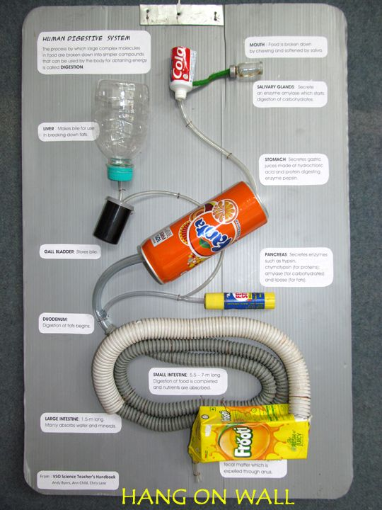 Surprising Toys From Trash Human Digestive System Proyectos Que Intentar Wiring Cloud Ostrrenstrafr09Org