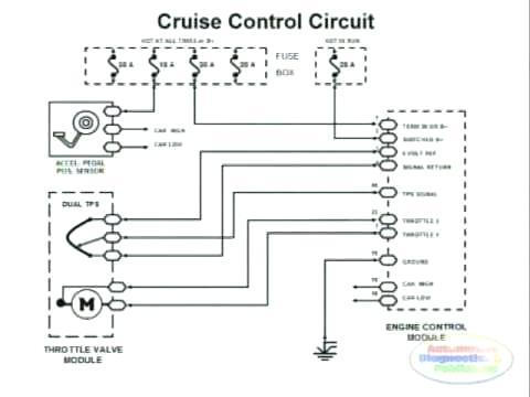 Phenomenal 2000 Freightliner Columbia Wiring Diagram Teachingwitharchives Com Wiring Cloud Apomsimijknierdonabenoleattemohammedshrineorg