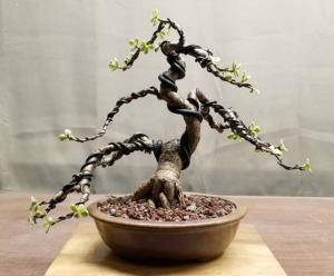 Pleasant Small Leaf Jade Bonsai Care And Development Wiring Cloud Monangrecoveryedborg